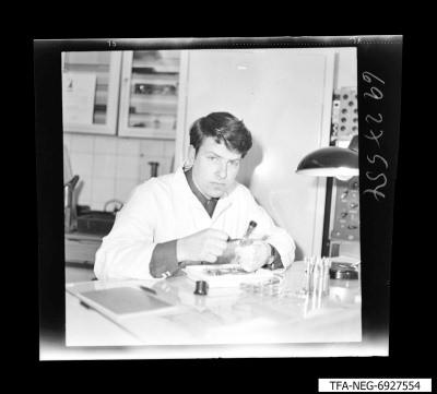 Arbeiter am Arbeitstisch, Foto März 1969